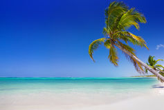 Tropical beach with palm trees. In Punta Cana, Dominican Republic Stock Photo