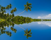 Tropical beach with palm trees. Royalty Free Stock Images