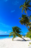 Tropical beach with palm trees Royalty Free Stock Photos