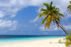 Tropical beach with palm trees. Tropical sand beach with palm trees Stock Images
