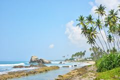 Tropical beach with palm trees Royalty Free Stock Photography