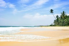 Tropical beach with palm trees. Sri Lanka Royalty Free Stock Photo