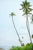 Tropical beach with palm trees. Sri Lanka Stock Photos