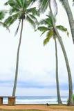 Tropical beach with palm trees. Sri Lanka Royalty Free Stock Image