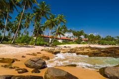 Tropical beach with palm trees. Royalty Free Stock Photo