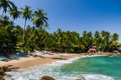 Tropical beach with palm trees. Stock Photos