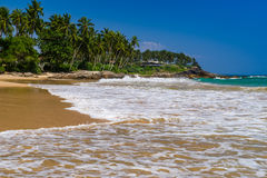Tropical beach with palm trees. Stock Images