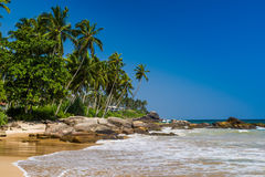 Tropical beach with palm trees. Royalty Free Stock Image