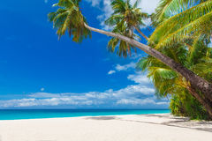Tropical beach with palm trees, summer vacation. Tropical sand beach with palm trees, summer vacation Stock Photo