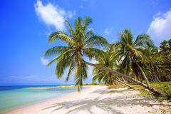Tropical beach. Palm trees with sunny day. Thailand. Koh Samui island. Beach with palm trees, island royalty free stock photography