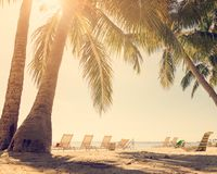 Tropical beach with palm trees. And sunny sky Royalty Free Stock Photo