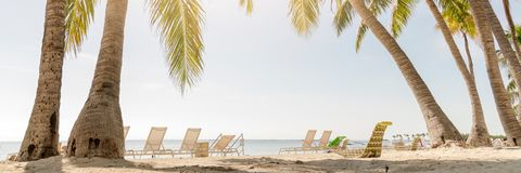 Tropical beach with palm trees. And sunny sky Stock Photography