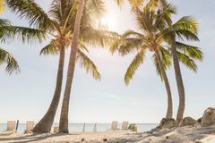 Tropical beach with palm trees. And sunny sky Stock Photo