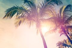 Tropical beach with palm trees. And sunny sky Royalty Free Stock Images