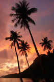 Tropical beach with palm trees at sunrise, Ang Thong National Ma Stock Image