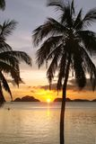 Tropical beach with palm trees at sunset, El Nido, Palawan island, the Philippines. Tropical beach with palm trees at sunset, El Nido, Palawan island in the Royalty Free Stock Photo