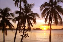 Tropical beach with palm trees at sunset, El Nido, Palawan island, the Philippines. Tropical beach with palm trees at sunset, El Nido, Palawan island in the Royalty Free Stock Image
