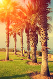 Tropical beach with palm trees. At sunset. Embankment, Netanya city, Israel Stock Images