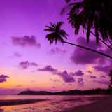 Tropical beach with palm trees. At sunset, Thailand Royalty Free Stock Photography