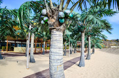 Tropical beach with palm trees. Tropical beach   with palm threes and wooden path Royalty Free Stock Photo