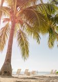 Tropical beach with palm trees. And sunny sky Royalty Free Stock Image