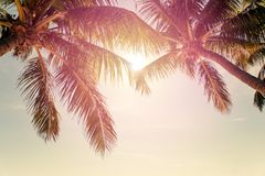Tropical beach with palm trees. And sunny sky Royalty Free Stock Photography