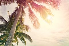 Tropical beach with palm trees. And sunny sky Stock Image