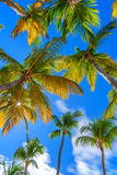 Tropical beach with palm trees. Vertical image of paradise tropical beach with palm trees on blue sky background Stock Photos