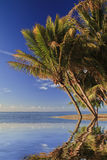 Tropical beach with palm trees and white sand. Mauritius Royalty Free Stock Image