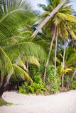 Tropical beach with palm trees and white sand Royalty Free Stock Photography