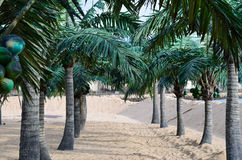 Tropical beach with palm trees Stock Image