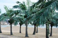 Tropical beach with palm trees Stock Photos