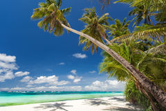 Tropical beach with palm and white sand Royalty Free Stock Photos