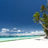 Tropical beach with palm and white sand Stock Photos