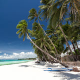 Tropical beach with palm and white sand Royalty Free Stock Image