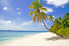 Tropical beach and palms. Tropical white sandy beach, palms and boat on the background Stock Photography