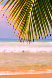 Tropical beach and palms. Secluded tropical beach in puerto rico with a palm tree in the foreground the carribean see and waves gently rolling on shore in the Royalty Free Stock Photo