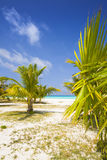 Tropical beach with palms Royalty Free Stock Images