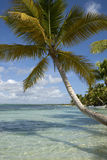 Tropical beach with palms. Tropical Royalty Free Stock Image