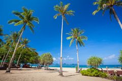 Tropical beach with palms Stock Photos