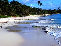 Tropical beach with palms at caribian sea like paradise background, dominican republic Royalty Free Stock Photography