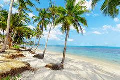 Tropical beach with palms Stock Images