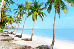 Tropical beach with palms Stock Photo