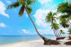 Tropical beach with palms Stock Photography