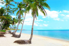 Tropical beach with palms. Tropical beach with coconut palm trees and white sand Royalty Free Stock Images