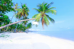Tropical beach with palms Royalty Free Stock Photography