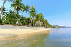 Tropical beach with palms Royalty Free Stock Image