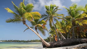 Tropical beach with palms. Tropical beach with coconut palms and white sand, Dominican Republic stock video