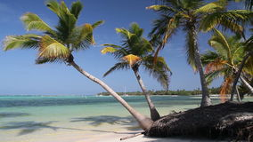 Tropical beach with palms. Tropical beach with coconut palms and white sand, Dominican Republic stock video footage