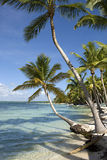 Tropical beach with palms. Tropical dominicana Stock Photo
